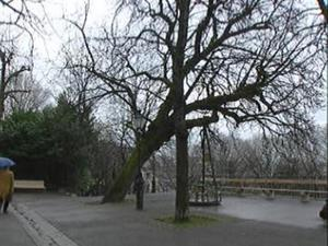 image_1068.jpg