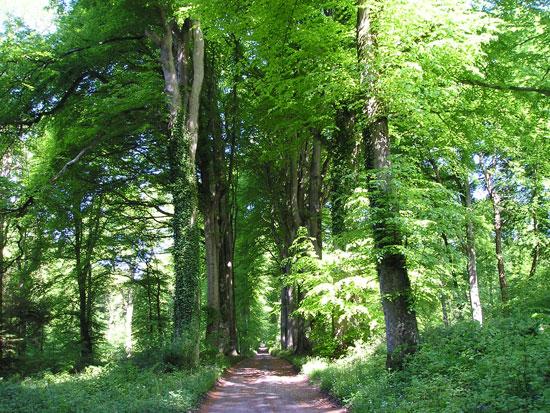 Forêt de Crécy - Somme