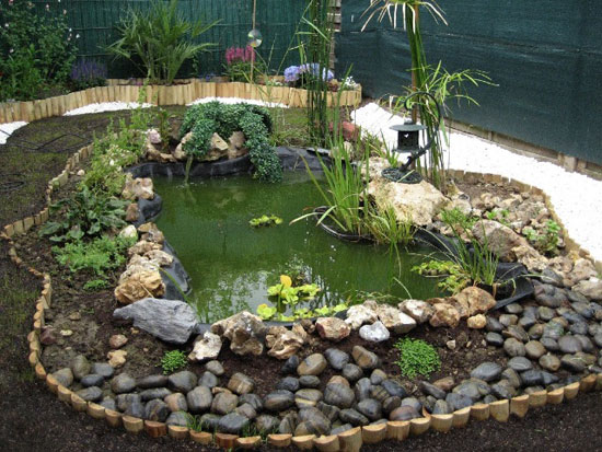 Jardin aquatique for Modele amenagement jardin