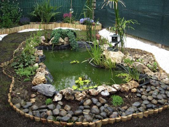 la première semaine d'un jardin aquatique