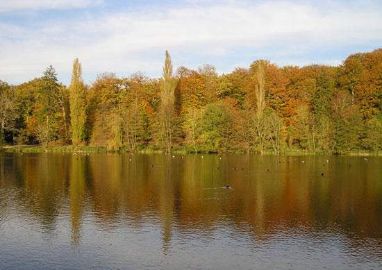 forêt de l'Oise
