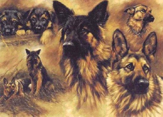 chiens domestiqués