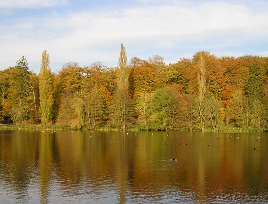 Des feuillus forêt de Compiègne - photo Joce