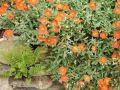 Fleurs en 1024 px