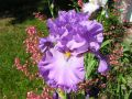 Iris en 1280 px