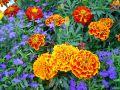 fleurs en 1280 px