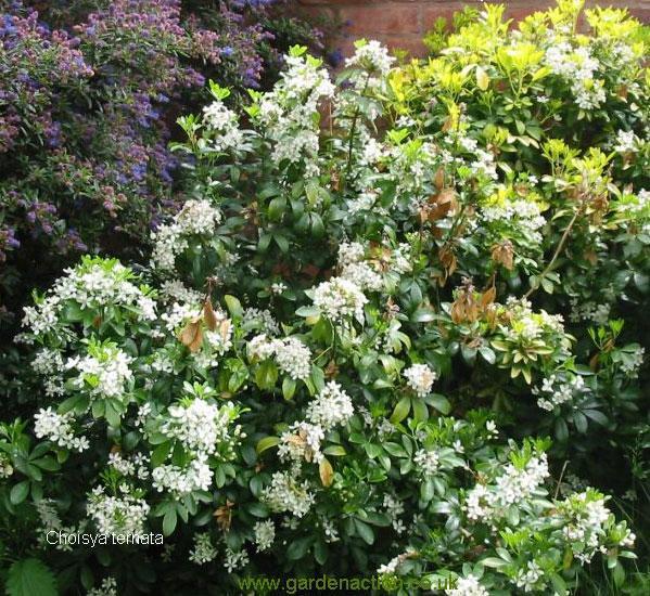 Haie champ tre for Catalogue arbustes jardin