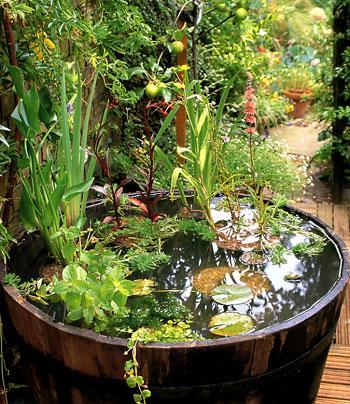 Jardin aquatique - Bassin dans un tonneau marseille ...