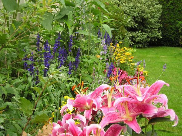 Que faire en mars au jardin for Jardin que planter en mars