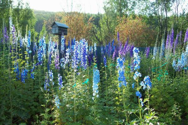Jardin bleu n° 2