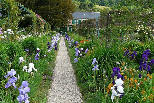 jardin bleu n° 3 - Giverny les Iris