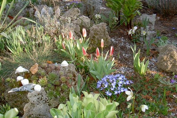 rocaille au printemps