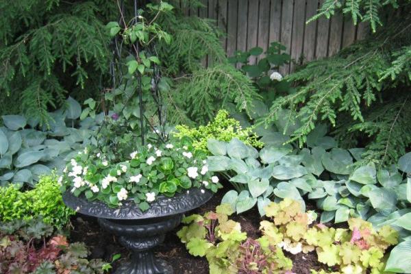 jardin à l'ombre avec vasque fleurs