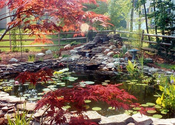 jardin et bassin aquatique aspect naturel