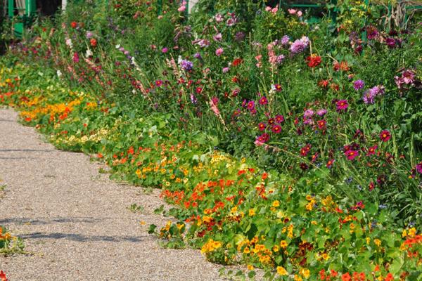 Prairie fleurie et capucines