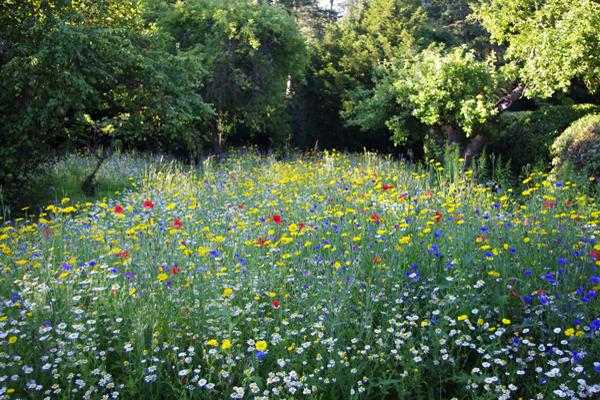 jardin facile à entretenir, prairie fleurie