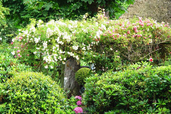 Jardin facile à entretenir, arbustes et rosiers