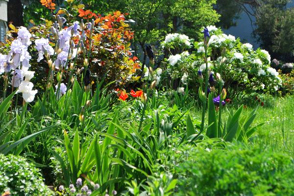 Jardin facile à entretenir, vivaces et arbustes