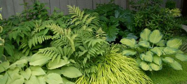 jardin à l'ombre avec fougère et hostas