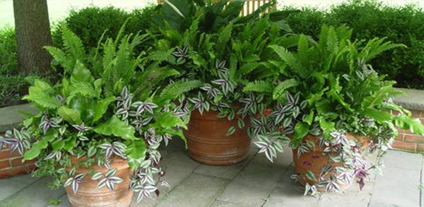 Jardin à l'ombre fougères en pots