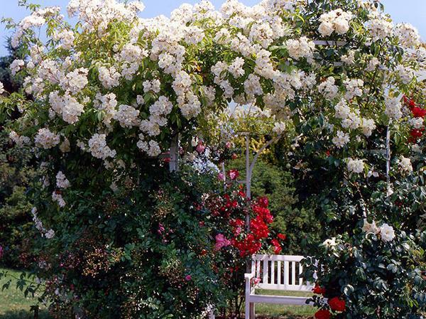 Jardin de roses invitant au repos