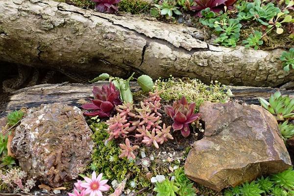 Entretien d'une rocaille en automne