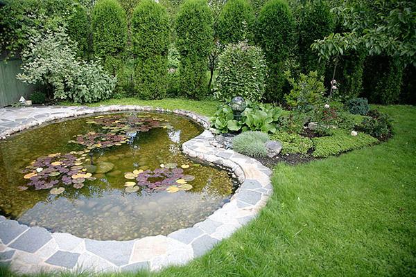 jardin aquatique avec bassin