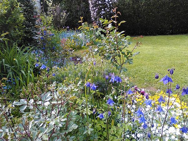 jardin  de vivaces et d'arbustes (facile à entretenir)