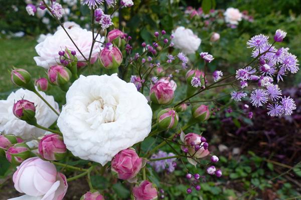 floraison vaporeuse...