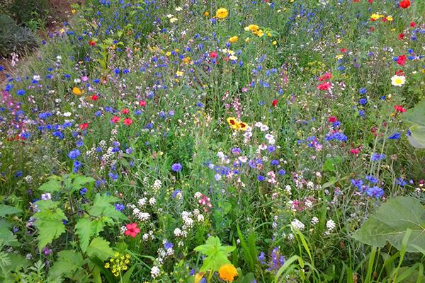 Espace praieie fleurie au jardin