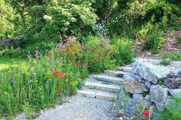 coin de prairie fleurie le long d'un escalier