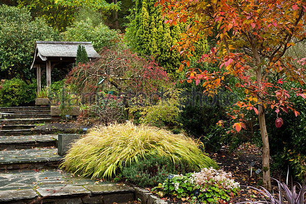 Entretien d'une bordure rocaille en automne